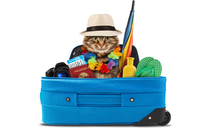 Cat in luggage with vacation gear.